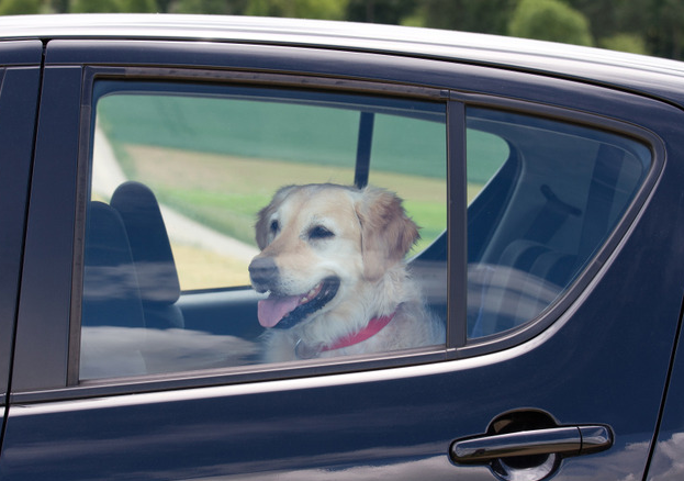 Pets in Vehicles